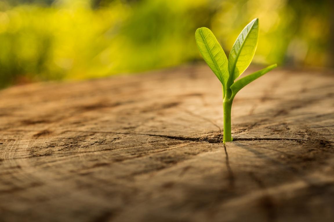 Beitrag von Biomasse zum Klimaschutz und zur Energiewende