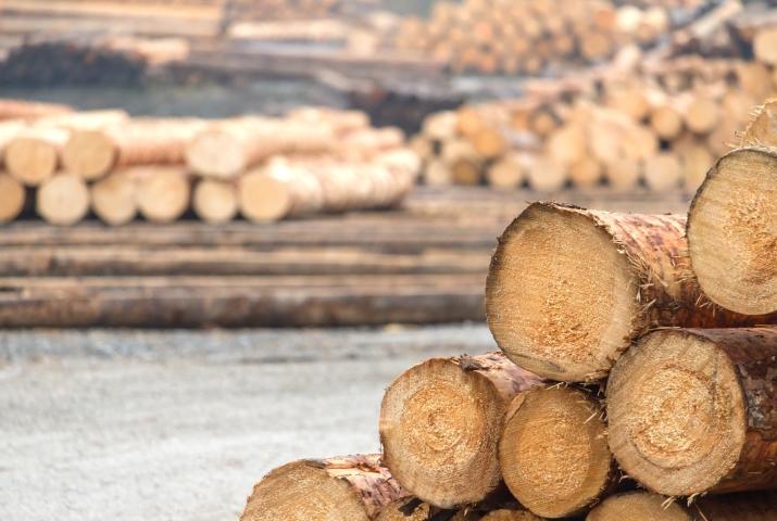 Nutzung fester Biomasse in Blockheizkraftwerken